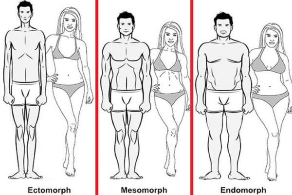Типы фигур у женщин, мужчин, мезоморф, эктоморф, эндоморф, фото